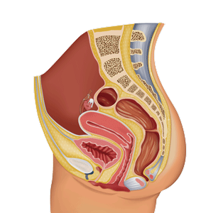 Vr female-reproductive