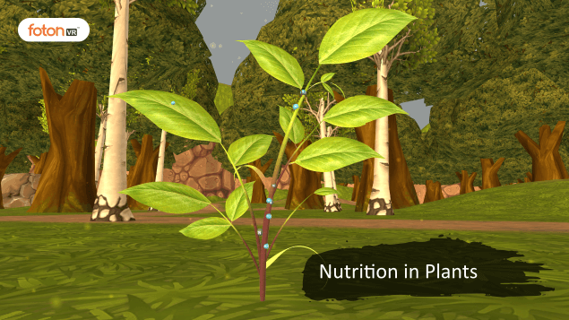 A Virtual Tour of Chapter 1 Nutrition in Plants