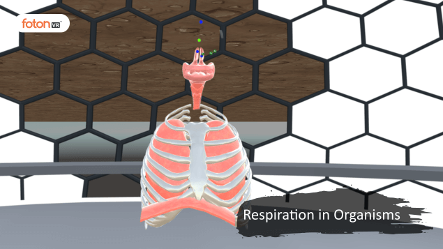 A Virtual Tour of Chapter 10 Respiration in Organisms