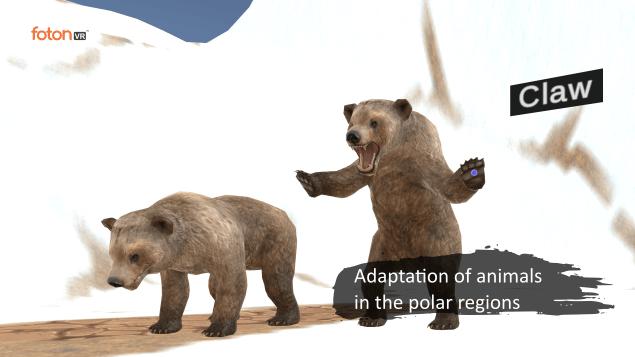 Virtual tour 1 Adaptation of animals in the polar regions