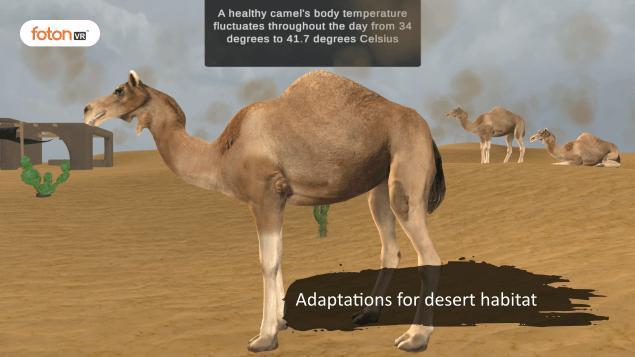 Virtual tour 1 Adaptations for desert habitat