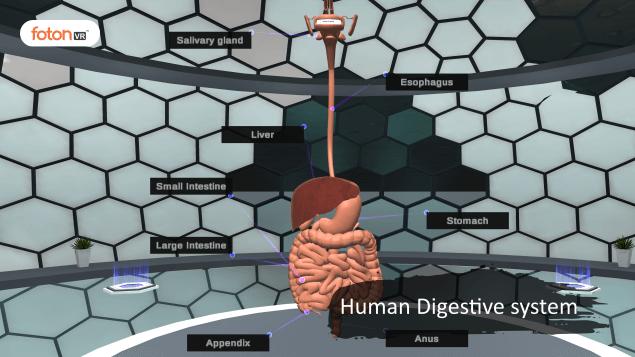 Virtual tour 1 Human Digestive system