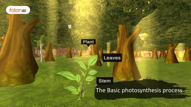 Virtual tour 1 The Basic photosynthesis process