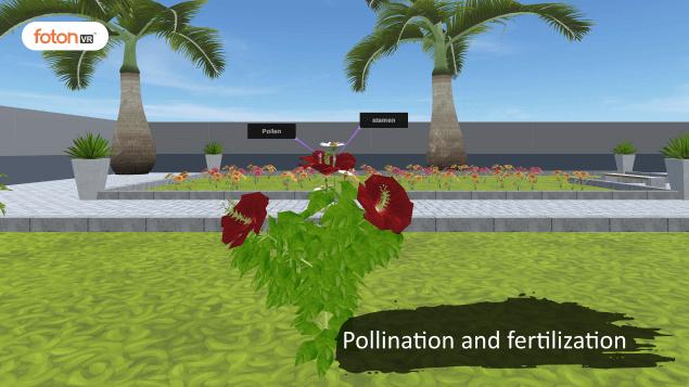 Virtual tour 11 Pollination and fertilization