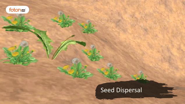 Virtual tour 12 Seed Dispersal