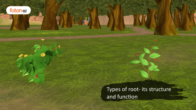 Virtual tour 2 Types of root- its structure and function