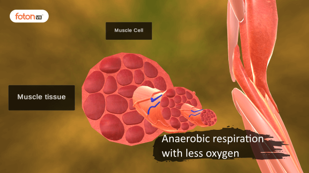 Virtual tour 4 Anaerobic respiration with less oxygen