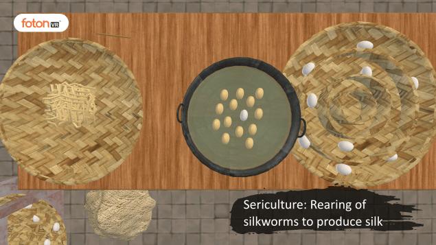 Virtual tour 4 Sericulture Rearing of silkworms to produce silk