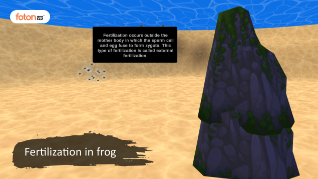 Virtual tour 5 Fertilization in frog