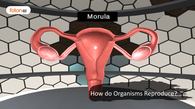 A Virtual Tour of Chapter 8 How do Organisms Reproduce