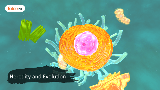 A Virtual Tour of Chapter 9 Heredity and Evolution