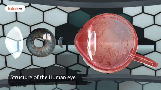 Virtual tour 1 Structure of the Human eye