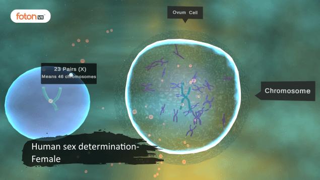 Virtual tour 10 Human sex determination- Female