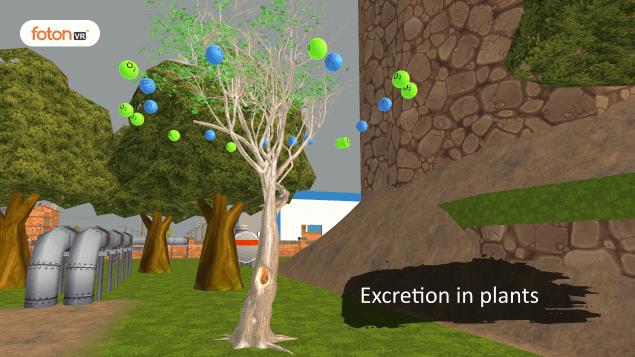 Virtual tour 12 Excretion in plants