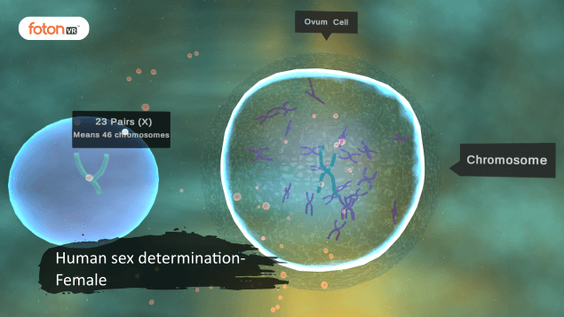 Virtual tour 3 Human sex determination- Female