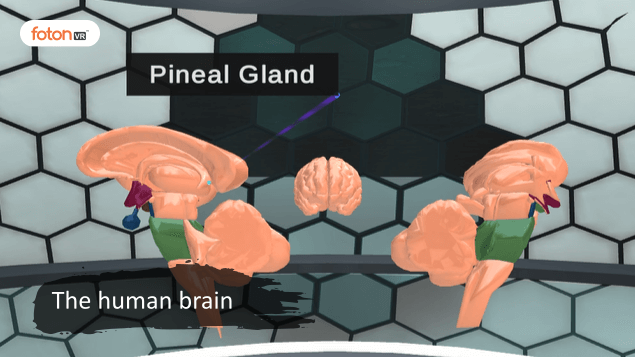 Virtual tour 3 the human brain