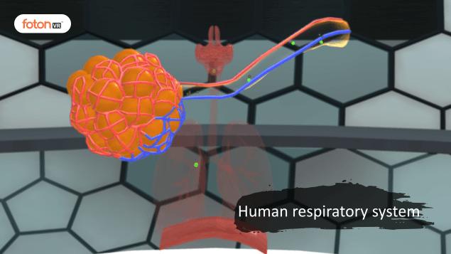 Virtual tour 5 Human respiratory system