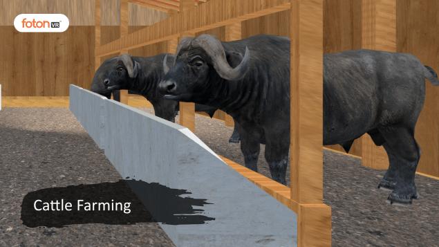 Virtual tour 6 Cattle Farming