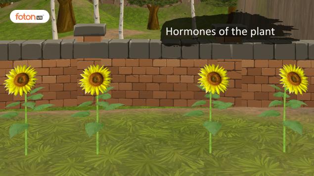 Virtual tour 7 Hormones of the plant