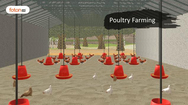 Virtual tour 7 Poultry Farming