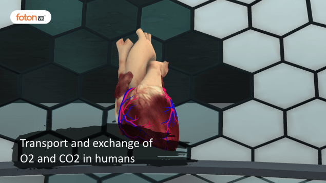 Virtual tour 7 Transport and exchange of O2 and CO2 in humans