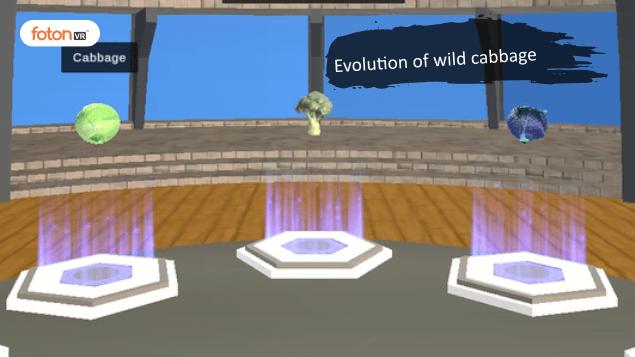 Virtual tour 8 Evolution of wild cabbage