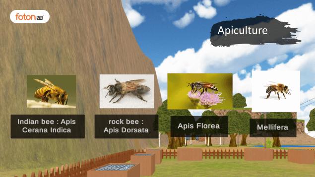 Virtual tour 9 Apiculture