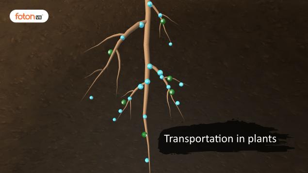 Virtual tour 9 Transportation in plants